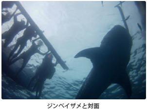 ジンベイザメと対面